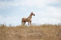 a tan horse in a pasture