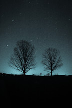 silhouettes of trees at night