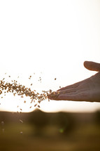 hand tossing seeds