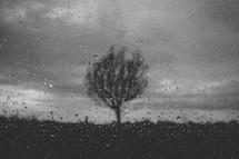 Tree seen through a rain covered window.