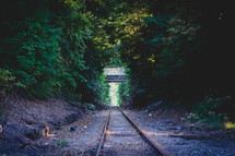 railroad track through a forest