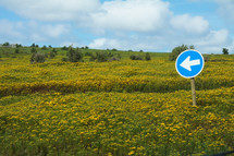 Field of yellow wild flowers with blue one way direction sign
