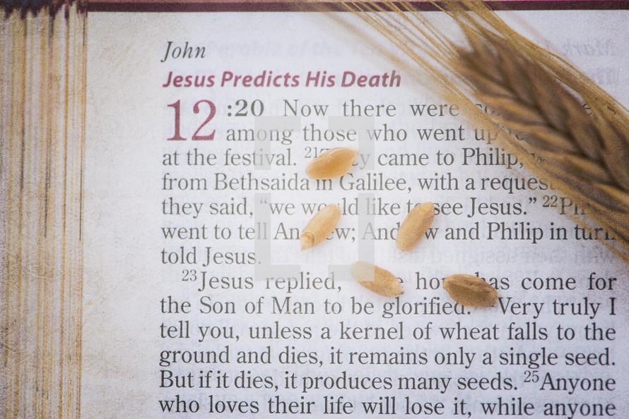 Jesus predicts his death, scripture reading