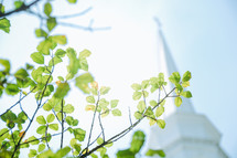 church steeple and green spring leaves