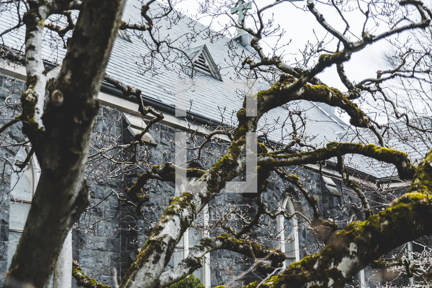 A bare tree in front of a stone church.