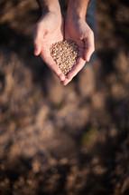hands full of seeds