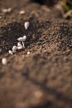 seeds on the ground