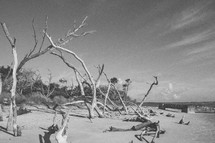 driftwood on the sands of a beach