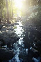 a creek in a jungle
