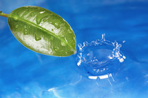 green leaf and water droplet splash