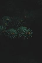 pine needles on a Christmas tree