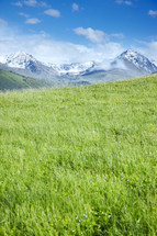 meadow of green grasses and snow capped mountain