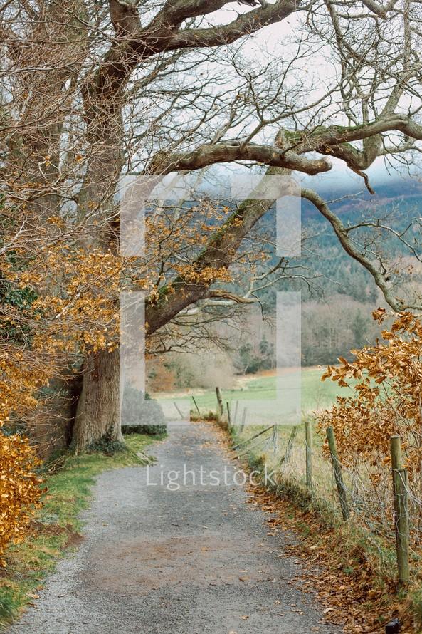 asphalt path under a tree