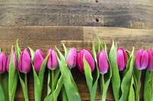 Purple tulips lined up on a wooden surface.