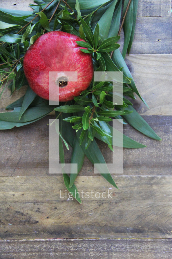 green leaves, pomegranate
