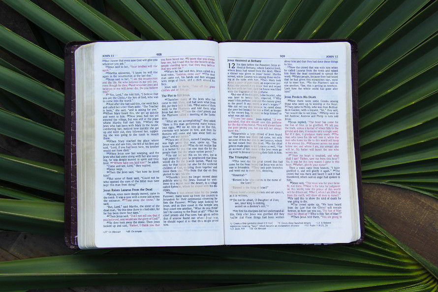 open Bible lying on palm fronds