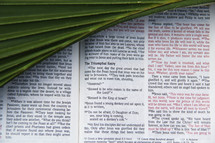 Palm Frond on scripture