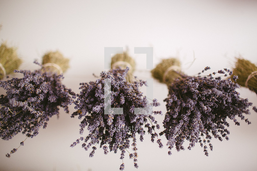 Hanging lavender bunches.
