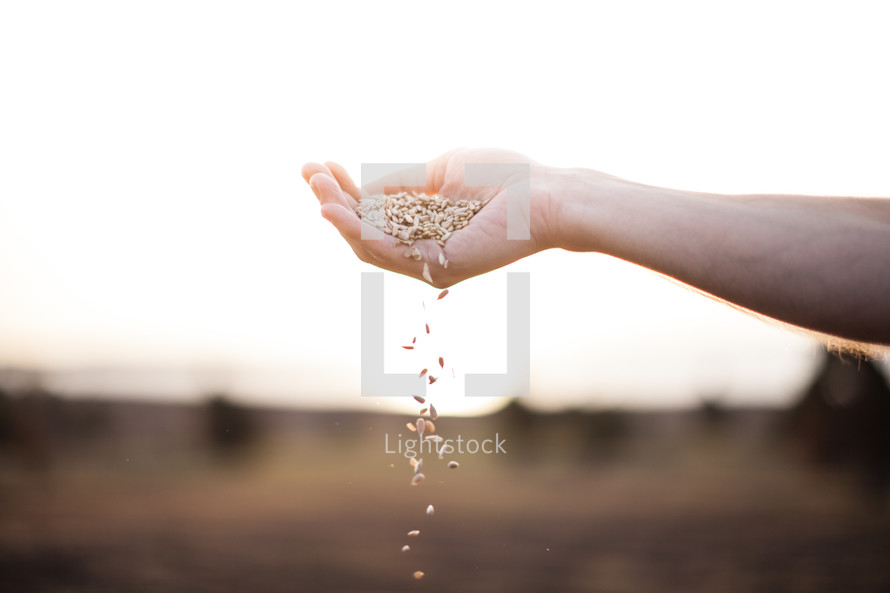 hand sprinkling seeds