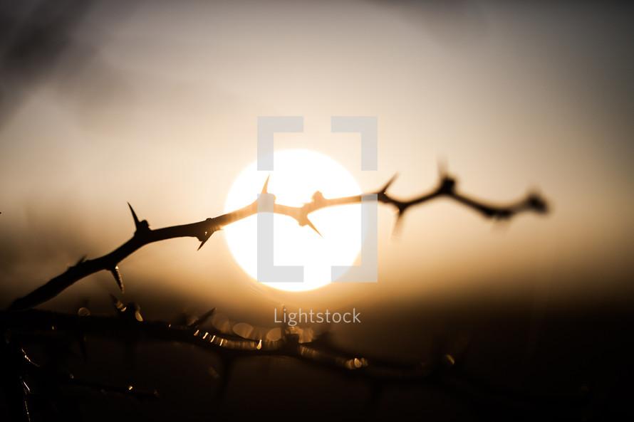 thorns and a sunrise