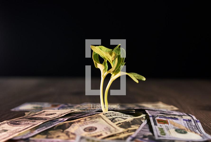 Plant with money around it.