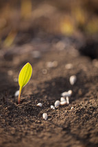seeds in the soil