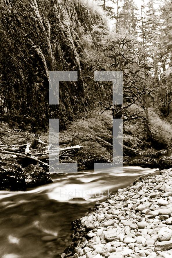 Water running through tree-lined rocky creek.