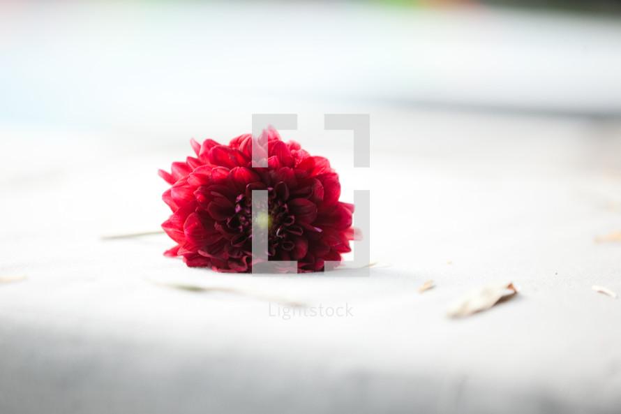 red flower on white