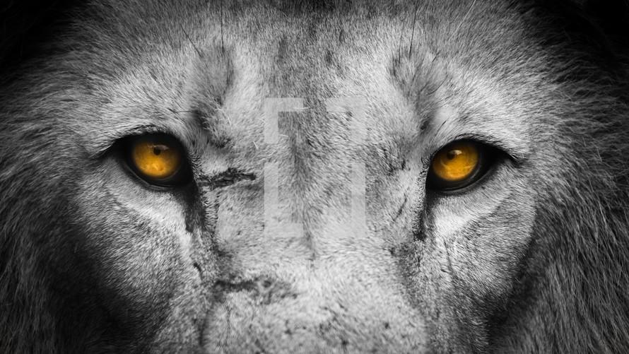 Golden Eyes Lion Face