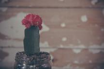 cactus in a mason jar