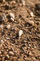 seeds on the ground