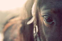 Close-up of a horse's face.