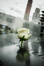 yellow rose in the 911 memorial