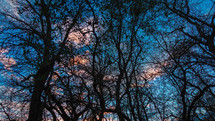 tree branches on bare trees at sunset