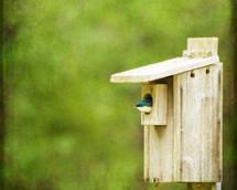 bird in a birdhouse
