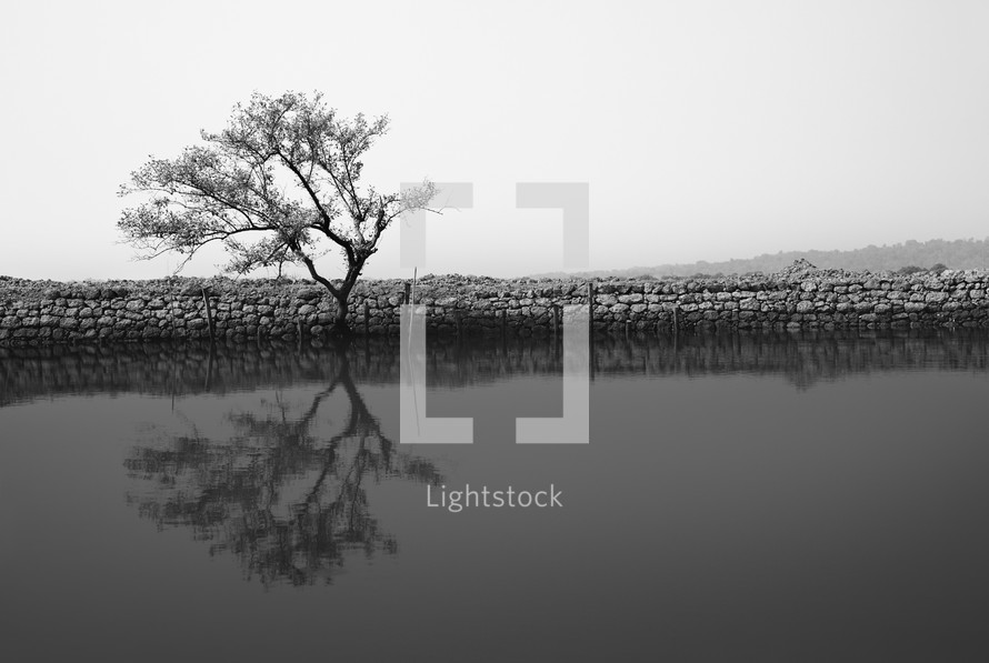 reflection of a tree on pond water