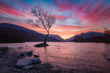 tree in a lake under a pink sky at sunset