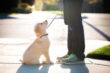 a little boy walking his puppy