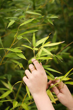 hands touching the leaves on a bush