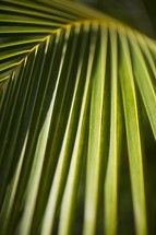 palm fronds closeup