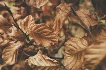 brown dead fall leaves