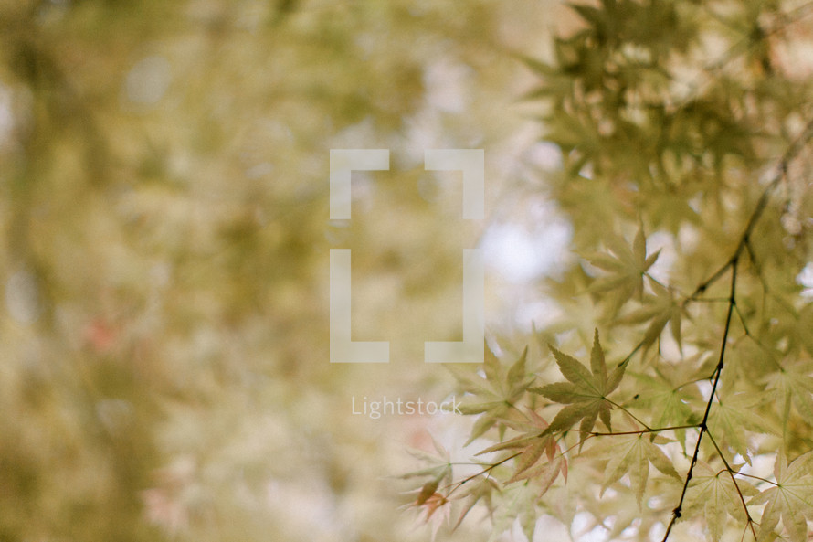 leaves on a tree background