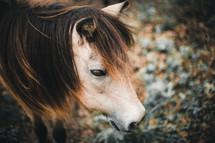 head of a pony