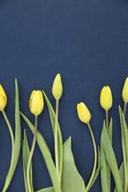 border of yellow tulips