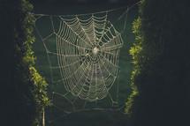 spider web in sunlight