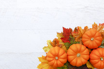 Autumn Thanksgiving Background with Copy Space