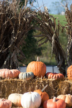 white and orange pumpkins on hay