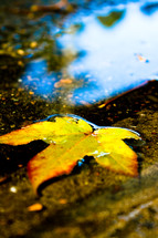 floating leaf in a puddle