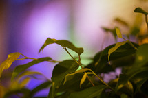 green leaves and bokeh lights