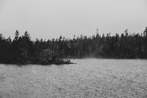 forest along a shoreline